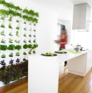 wall planter in kitchen